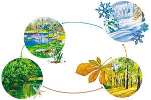 Сезонная перестройка в организме