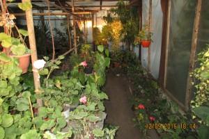 Оранжерея цветов (маленькая её часть)
